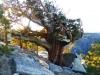 Portaldge Fly als Windschutz am coolsten Baum des ganzen Gipfelplateaus