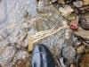Fossils (Crinoids) at KM 302
