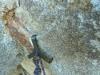 SL 8 - Talon Hook
